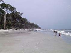 hunting island state park picture, images, photo and wallpaper, hunting island state park holiday in summer, hunting island state park travel