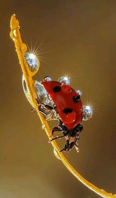 So beautiful!...Great example of an amazing macro shot and ladybird are a great…