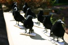 Dollar store crow Halloween party invitations;