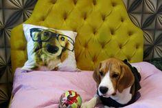 Piscina y masajes en el primer hotel de lujo para perros en Asia