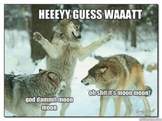 oh moon moon - Google Search
