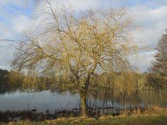 Signs of spring at Wollaton Park lake