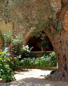 Scenes from the Monastery of Arkadi on the Greek island of Crete Beautiful Flowers, Beautiful Pictures, Bbq Area, Greece Travel, Greek Islands, Crete, Pathways, French Country, Outdoor Living