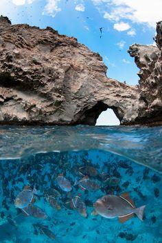 Boatswain Bird Island ~ Black Durgon Triggerfish at Boatswain Bird Island, Ascension Island by Paul Colley