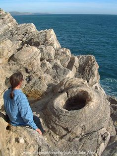 the fossil forest of Dorset, England