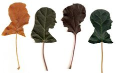 Jenny Lee Fowler's Leaf Silhouettes in paper. Reminiscent of old fashioned silhouette portraits.