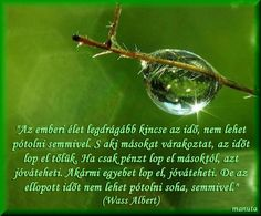 wass albert idézetek Motto, Life Quotes, About Me Blog, Thoughts, Motivation, Funny, Humor, Inspiration, Vans
