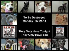 10 BEAUTIFUL DOGS TO BE DESTROYED TOMORROW.To rescue a Death Row Dog, Please read this: http://urgentpetsondeathrow.org/must-read/  To view the full album, please click here:
