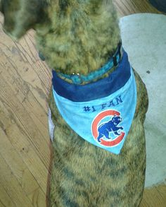 Bandana / Chicago Cubs #1 Fan / Over the Collar Dog by Mydeye - Spring is Coming!!