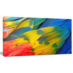 DesignArt 'Scarlet Macaw Feathers' Graphic Art on Wrapped Canvas Size: