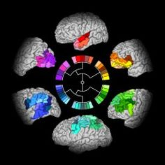 The brain-wheel: towards a hierarchical connectome