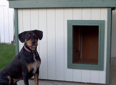 Joey - Washington:  several years of being tried and tested, this dog house has been proven to be the most comfortable and the safest home you can build for your beloved dog.