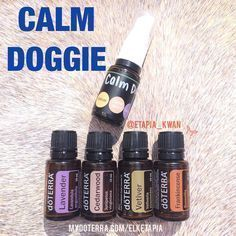 also use this essential oil blend to help keep him calm. Some essential oils are beneficial to our pets as well. CALM DOGGIE RECIPE: for a pound dog spray bottle): 10 drops Lavender 5 drops Cedarwood 2 d. Essential Oils Dogs, Essential Oil Spray, Natural Essential Oils, Young Living Essential Oils, Essential Oil Diffuser, Essential Oil Blends, Natural Oils, Dog Calming Essential Oils, Calming Oils