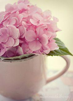 Pink hydrangea bloom in a pink mug My Flower, Pretty In Pink, Pink Flowers, Beautiful Flowers, Fresh Flowers, Hortensia Hydrangea, Pink Hydrangea, Hydrangea Bloom, Ideias Diy