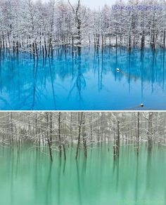 """""""Blue Pond"""" in Hokkaido, Japan turns turquoise blue or emerald green, depending on the weather and amount of light."""