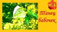 ТАНЕЦ БАБОЧЕК🦋  Бабочки в природе🦋