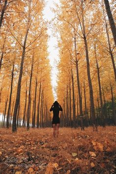 by nickverbelchuk landscape nature travel sun tree fall gold leaf season wood canon countryside dawn weather photograp Autumn Photography, Photography 101, Creative Photography, Landscape Photography, Portrait Photography, Travel Photography, Fall Pictures, Fall Photos, Travel Pose