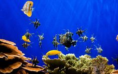 Higher numbers of fish also helped to hold people's attention for longer and   improve their moods