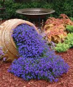 blue lobelia seeds - Bing Images