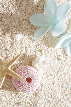 Shells and flowers on the beach