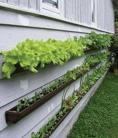 雨どいを使って省スペースな家庭菜園をDIY : ライフハッカー[日本版]