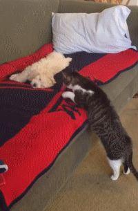 Best to Let Sleeping Pups Lie