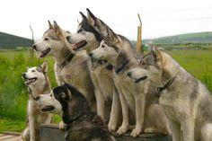 2hr Husky Sledding Experience for 2