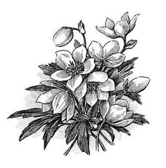 depositphotos_139902410-stock-photo-sketch-of-a-bouquet-of.jpg (441×449)