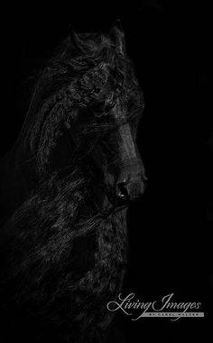 Black Friesian's Face  Fine Art Horse Photograph  Horse