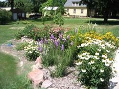 I like that this rain garden does double duty as a butterfly garden.