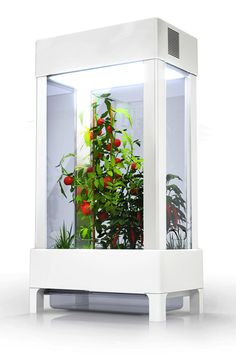 The Advantages Of Growing Food Indoors With Hydroponic Gardening Hydroponic Farming, Hydroponic Growing, Hydroponics System, Indoor Aquaponics, Smart Garden, Home And Garden, Family Garden, Indoor Vegetable Gardening, Kitchen Gardening