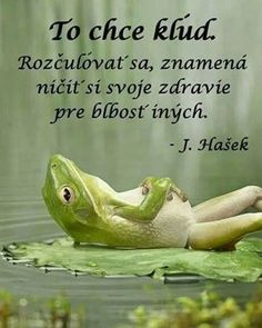 No es flojera . es paz interior / It's not laziness . it's inner peace Weekday Quotes, Paz Interior, Its Friday Quotes, Humor Grafico, Inner Peace, Funny Images, Animals Beautiful, Wise Words, Funny Animals