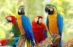 תוצאת תמונה עבור tropical birds