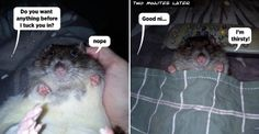 Rat - going to bed