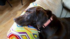 Green Bean, Salt And Water, Dog Design, Labrador Retriever, Dogs, Fun, Animals, Labrador Retrievers, Green Beans