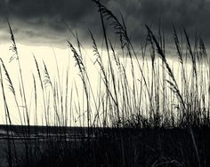 Black and White Beach Photography Sea Oats photos. Storm Brewing print. Gulf Coast - Adding canvas photography to the walls of a room will really give it a soft touch! | Pretty Little Liars