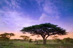 #Paysage du #Serengeti, #Tanzanie.