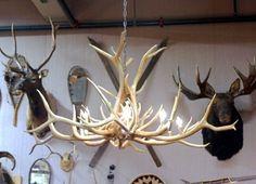 Google Image Result for http://eclecticrevisited.files.wordpress.com/2011/01/elk-antler-chandelier-interior-decorating-cabin-lodge-decor.jpg%3Fw%3D500