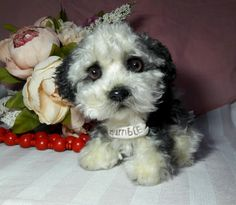 The Puppy Bumble by Alisa's Wonderland - private collection