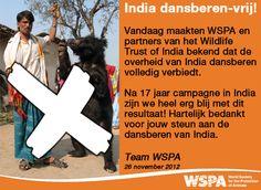 Geweldig nieuws! Na 17 jaar campagne voeren heeft de Indiaase overheid nu samen met WSPA een vergaand plan opgesteld voor het beschermen van haar beren. Deze prachtige dieren zullen nu niet meer worden gebruikt als 'entertainment'.