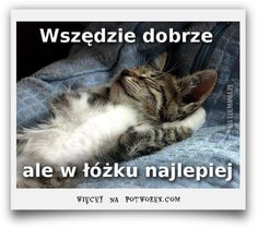 Here at EBENBLATT you& find the coolest and funniest cat shirts for cat lovers, have a look! Funny Cats, Funny Animals, Cute Animals, Crazy Cat Lady, Crazy Cats, I Love Cats, Cool Cats, Dou Dou, Lots Of Cats