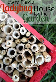 They make this look easy! How to Build a LadyBug House. The kids would love this.
