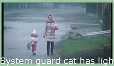 Entire body guard cat has lightning reflexes – brand-new #GifHumor, #KarmaGif, #WeirdGif, #ReactionGif | #BestFunnyGifs, #GifFunnyHumor, #HappinessGif, #SoTrueGifHilarious, #SuckGif