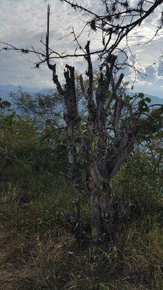 Salto del mico