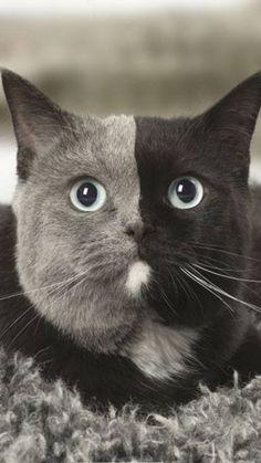 Half black, half gray...so beautiful....