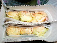 Caramel Antike Garden Rose Garden Roses, Caramel, Cabbage, Vegetables, Food, Antiquities, Sticky Toffee, Candy, Essen