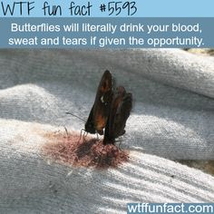 WTF Fun Facts is updated daily with interesting & funny random facts. We post about health, celebs/people, places, animals, history information and much more. New facts all day - every day! Wow Facts, Wtf Fun Facts, True Facts, Funny Facts, Random Facts, Random Things, Funny Quotes, Creepy Facts, Creepy But True