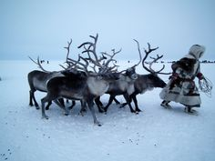 Nomadic Nenets reindeer herder on the Yamal Peninsula in winter, Arctic Siberia