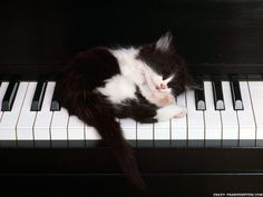 I would play a song for you but I am much to tired...you'll have to come back latter