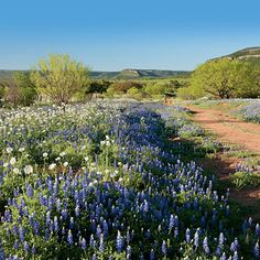 Loved spring in the Texas Hill Country when living there.  Want to go back